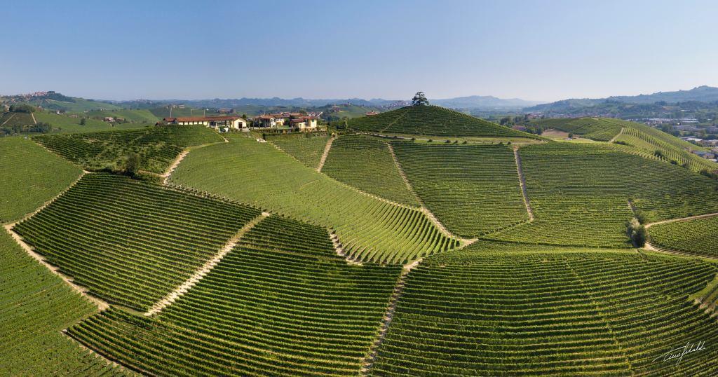 This image has an empty alt attribute; its file name is cordero-di-montezemolo-vineyard-shot.jpg